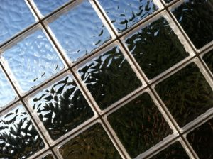 windows manufacturers in Ontario