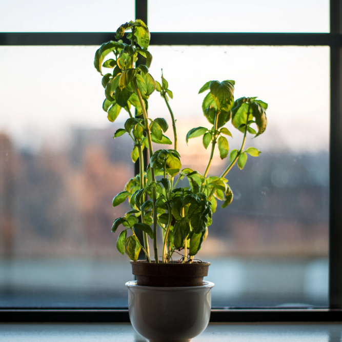 green plant sits in front of window overlooking forest